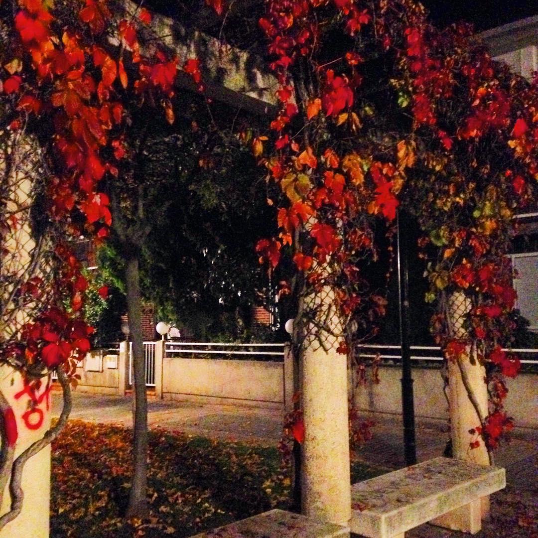 otoño esyumi